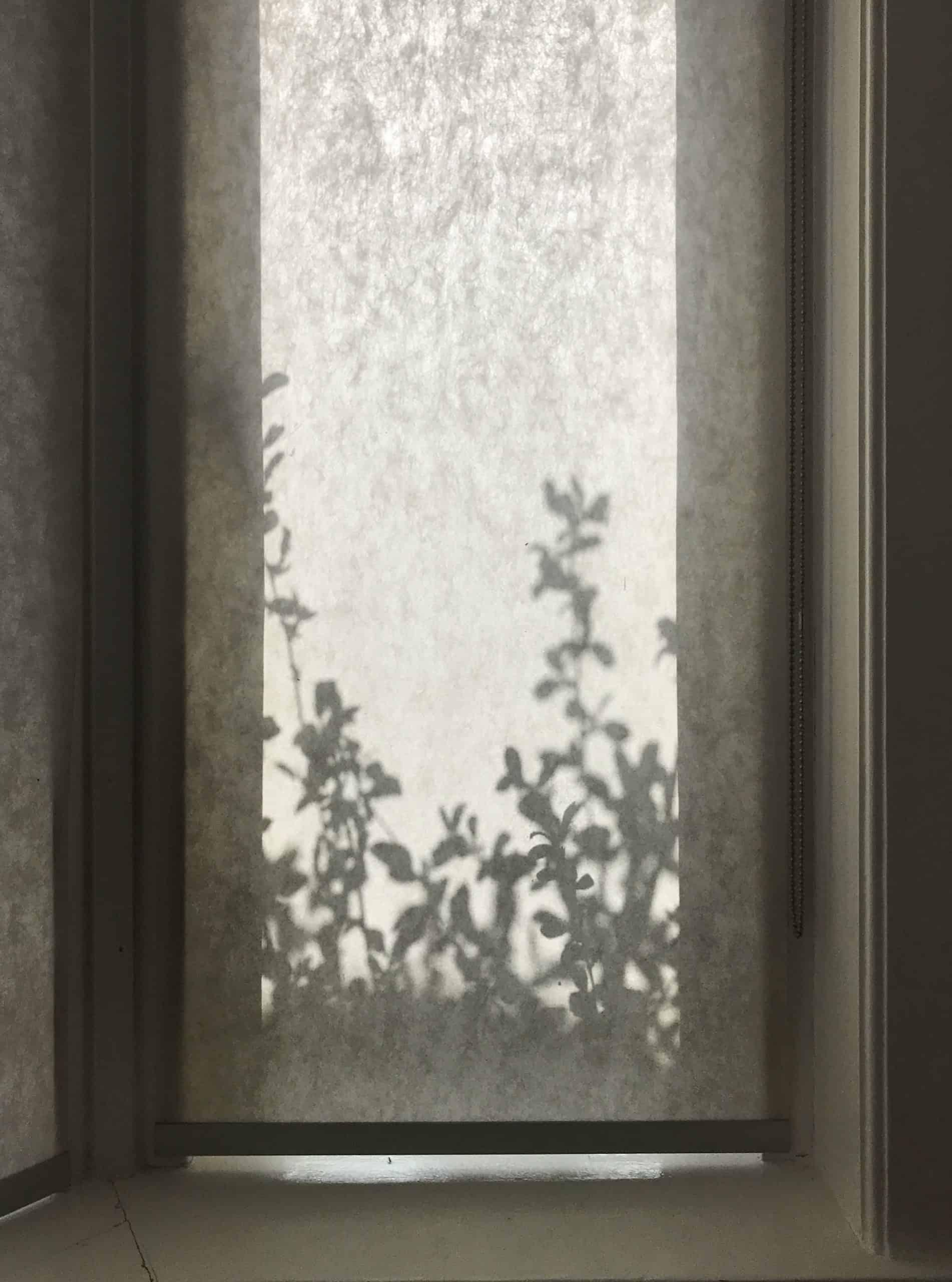 Schaduw van bladeren op het raam