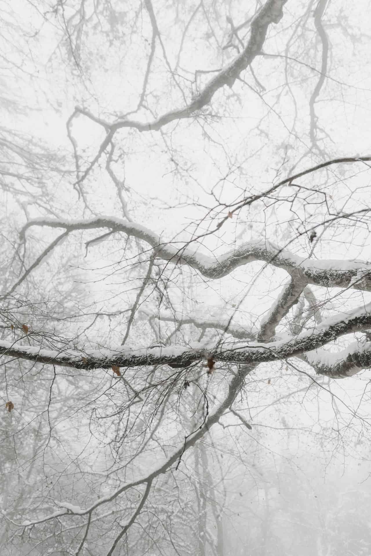 Mist en kou in winterbos